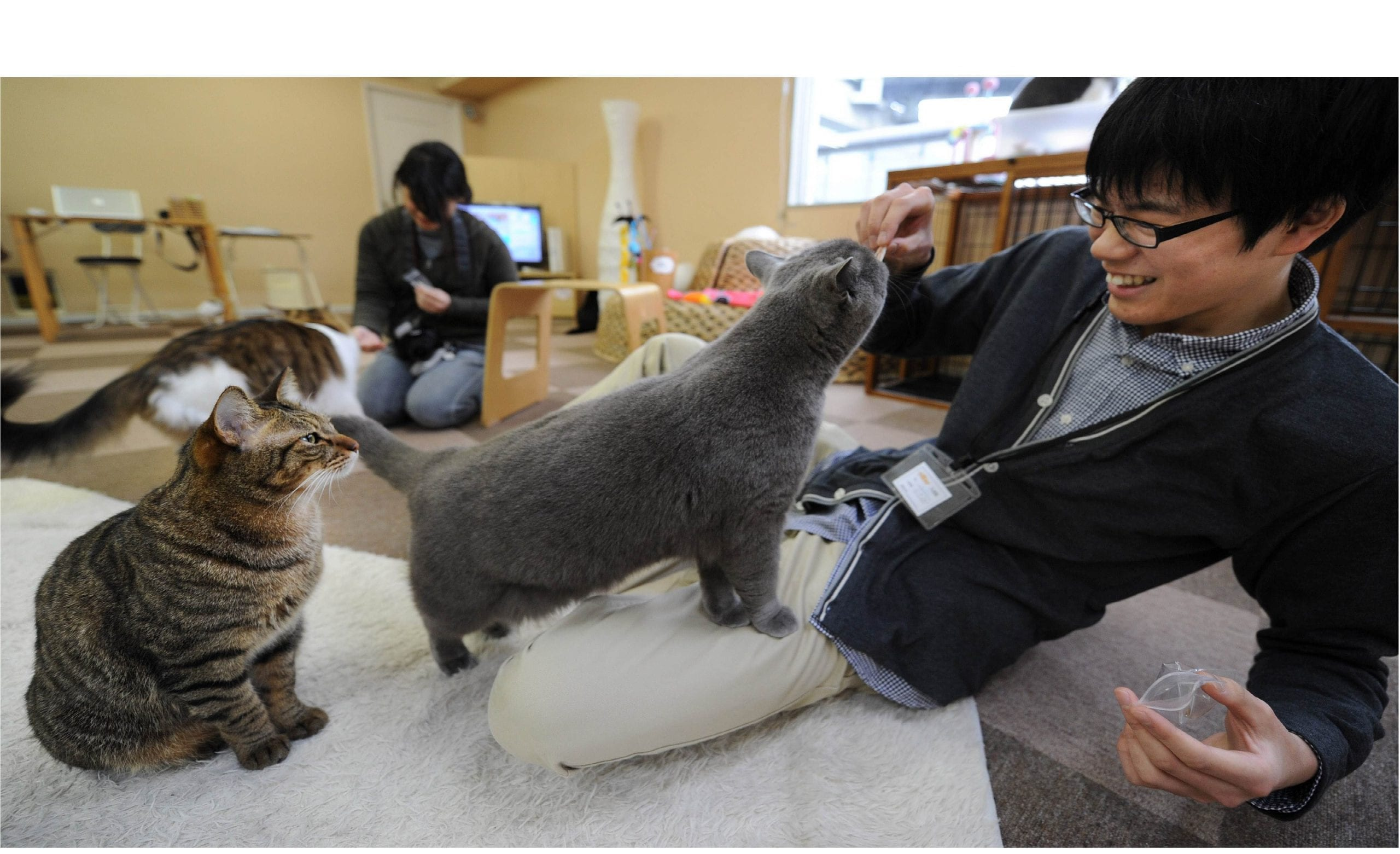 JAPAN-ANIMALS-CAFE