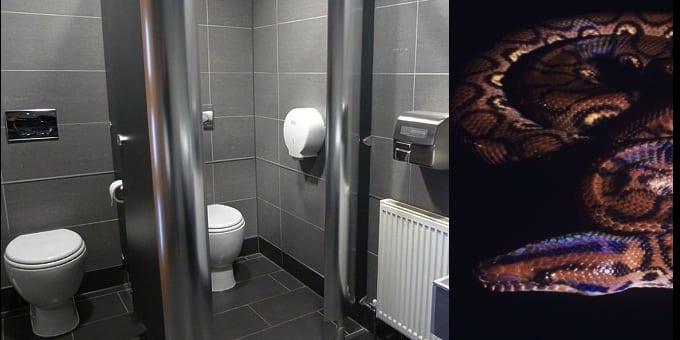 serpent-toilettes