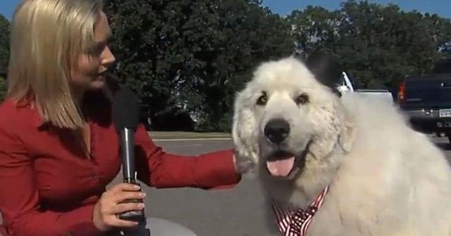 duke-perro-alcalde