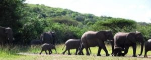 elephant-herd-by-hilde-reviewedlrcropped
