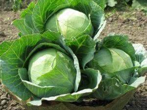Santé : consommez ces aliments vous donnera des maux de ventre