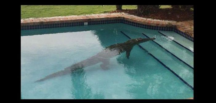 mexique un jeune homme attaqu par un crocodile dans une