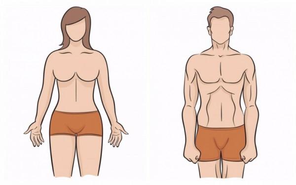 Как сделать узкую талию мужчины