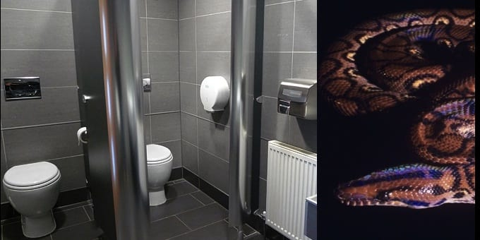 serpent-toilettes