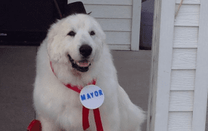USA: Un chien élu maire dans un village (Photo)