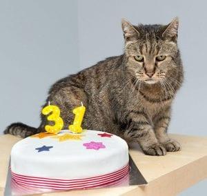 Le chat le plus vieux du monde a fêté ses 31 ans