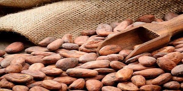 Saviez vous que le cacao possède plus de 5 vertus incroyables pour votre santé