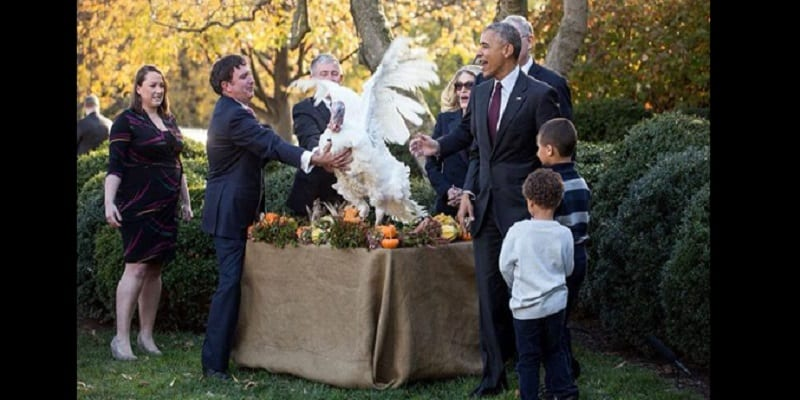 Thanksgiving barack obama gracie deux dindes de la maison for Barack obama a la maison blanche