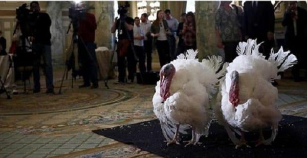Thanksgiving: Barack Obama gracie deux dindes à la Maison Blanche (PHOTOS)