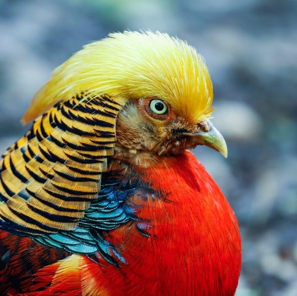 """Un oiseau qui aurait """"la même coupe de cheveux que Donald Trump"""" fait sensation sur internet"""