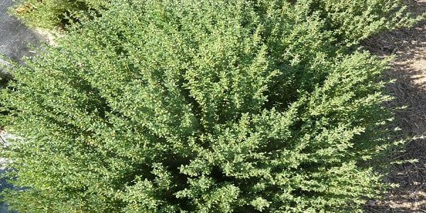 5 plantes à avoir absolument chez vous car, elles chassent naturellement les ondes négatives