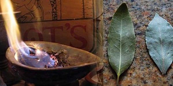 Voici pourquoi vous devez absolument utiliser les feuilles de laurier