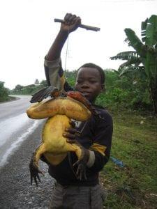 Découverte de la plus grande grenouille du monde. Photos