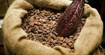 Cacao-and-Beans