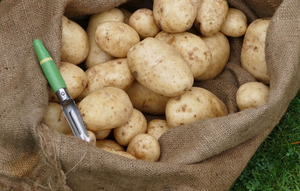 patates-vieilles-10900-ans-utah