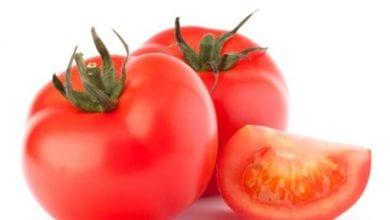 cropped-Tomates.jpg