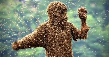 voleur-abeilles