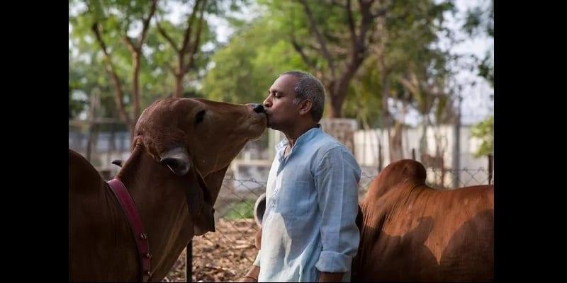Inde/Insolite: Un homme abandonne sa famille pour vivre avec ses vaches (photos)