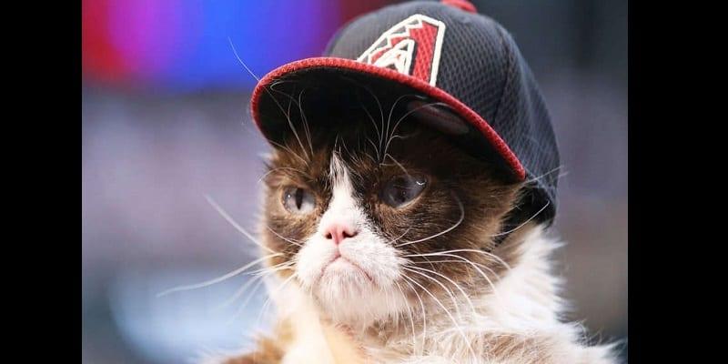 USA/Insolite: Un chat gagne 710 000 $ pour violation de droit d'auteur (photos)