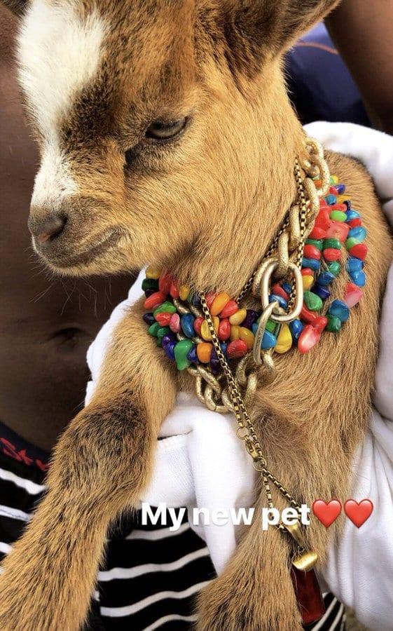 Showbiz: Wikzid présente son nouvel animal de compagnie...Une chèvre!