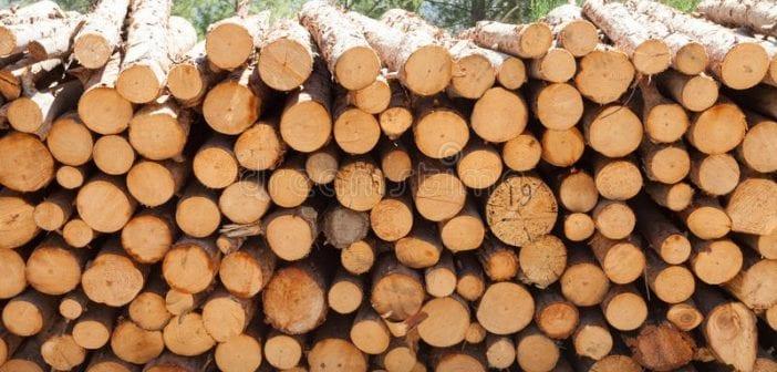 troncs de bois