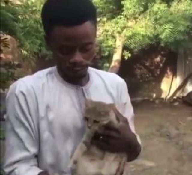 Nigeria: un homme lègue 20% de sa fortune à son chat