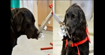 Sniffer-dogs-merged-for-wordpress-696×350