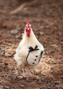 United States: A woman organizes a wedding ceremony for her 2 chickens (photos)