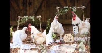 Lady-organizes-wedding-ceremony-for-2-chickens-lailasnews