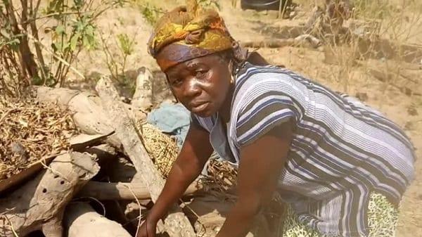 Ghana: des termites détruisent toute l'économie d'une veuve