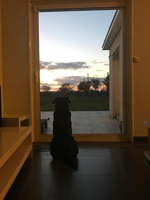Disparition d'Emiliano Sala: émouvant, son chien continue toujours de l'attendre-Photos