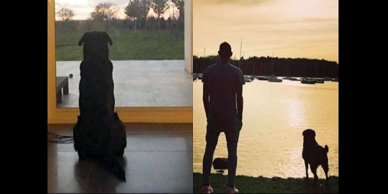 emiliano-salas-dog-is-anxiously-waiting-for-his-masters-return-photos