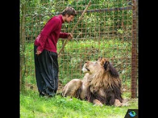 Un homme mutilé à mort par son lion de compagnie-Photos