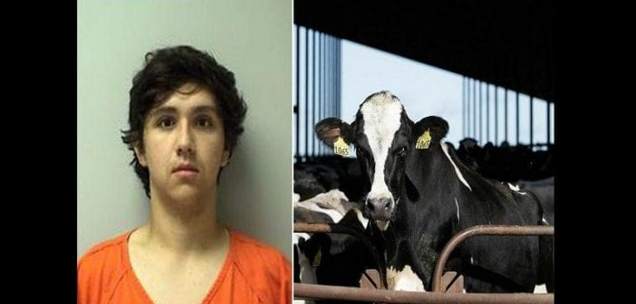 19-year-olda-joshua-litza-faces-7-years-jail-term-for-starving-cows