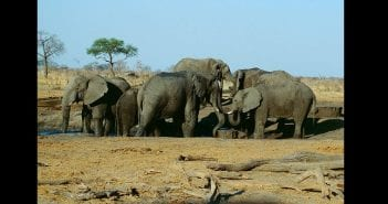 138af8bb-herd_of_elephant_in_the_hwange_national_park._zimbabwe._-_panoramio