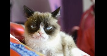 1558091332_190517-grumpy-cat-mc-10373_73c2205bcb0707f02eb5558337e488ef.fit-760w