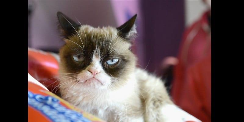 1558091332_190517-grumpy-cat-mc-10373_73c2205bcb0707f02eb5558337e488ef.fit-760w
