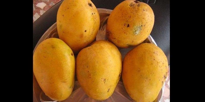 mangues