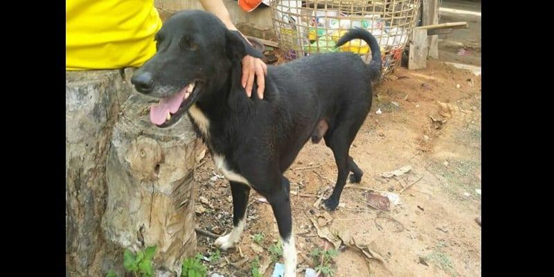 Thaïlande: Un nouveau-né enterré vivant par sa mère sauvé par un chien (photos)