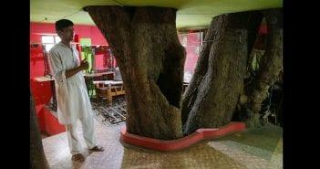 Inde-ils-construisent-leur-maison-autour-d-un-arbre-pensant-qu-un-dieu-y-reside (1)