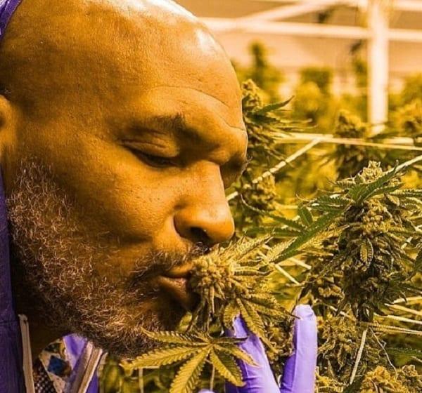 L'impressionnante consommation de cannabis de Mike Tyson — Buzz