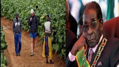 ZIMBABWE 2