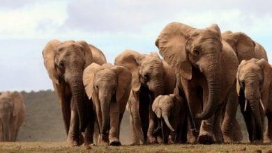 cover-r4x3w1000-57df65405a73d-elephant-afrique-botswana