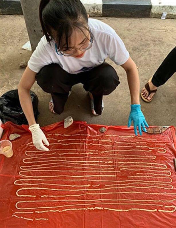 Un ténia de plus de 18m émerge de l'anus d'un homme, le plus long enregistré en Thaïlande depuis 50 ans: Photos