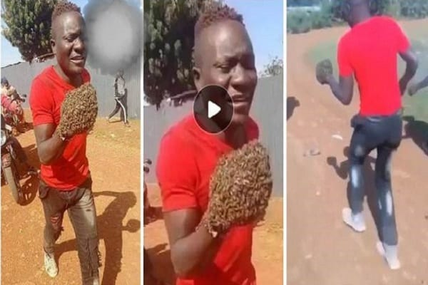 Thieves-In-Pain-Return-Items-They-Stole-After-Swarm-Of-Bees-Taught-Them-A-Lesson-Video-Below